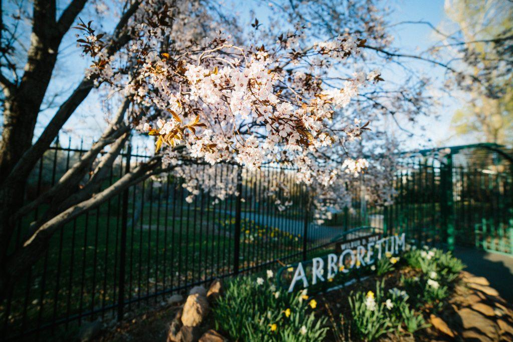 Arboretum by Kellie Sasso