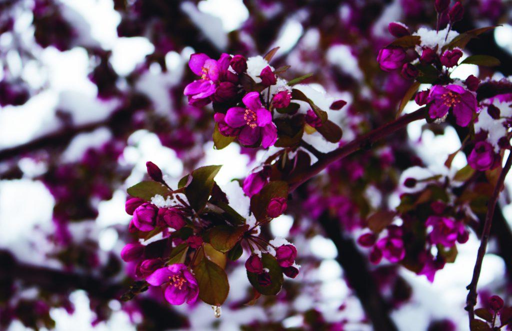 Flowers by Kenny Taboada