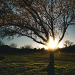 Tree Sunset by Kellie Sasso